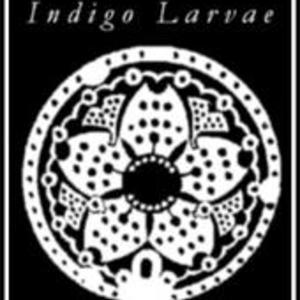 Indigo Larvae